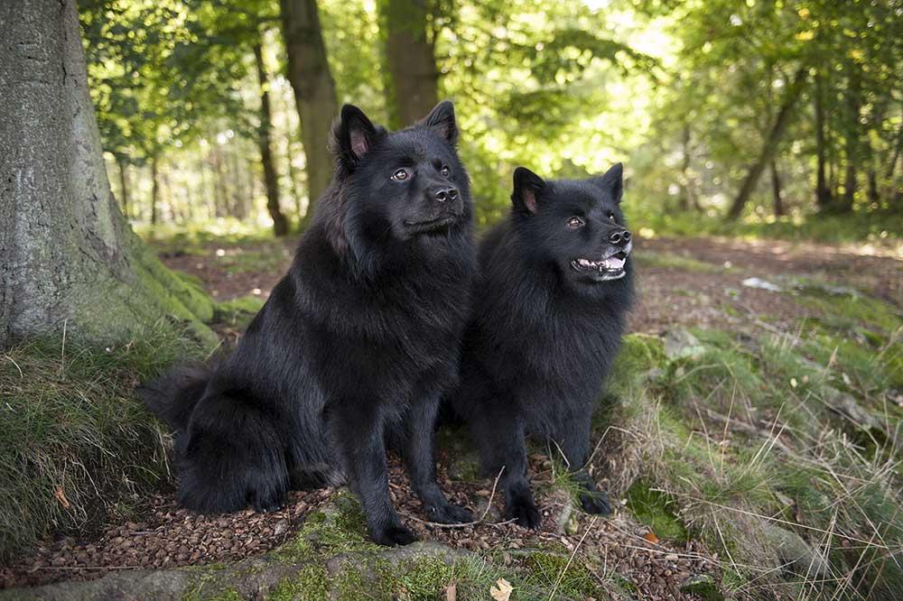 Ayko (re) und Ares (li)