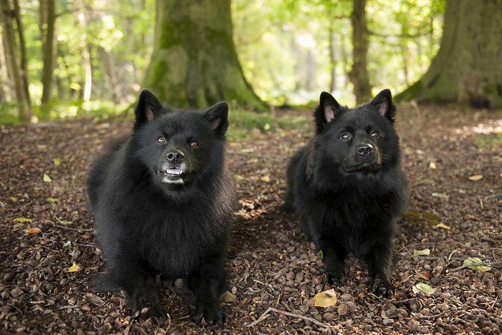 Ayko und Ares