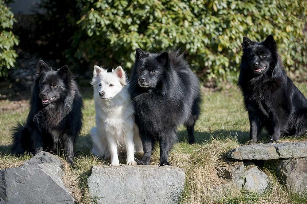 Familienfoto mit Gemma, Ayko (Mitte), Ares(re) und Alvaro (li)